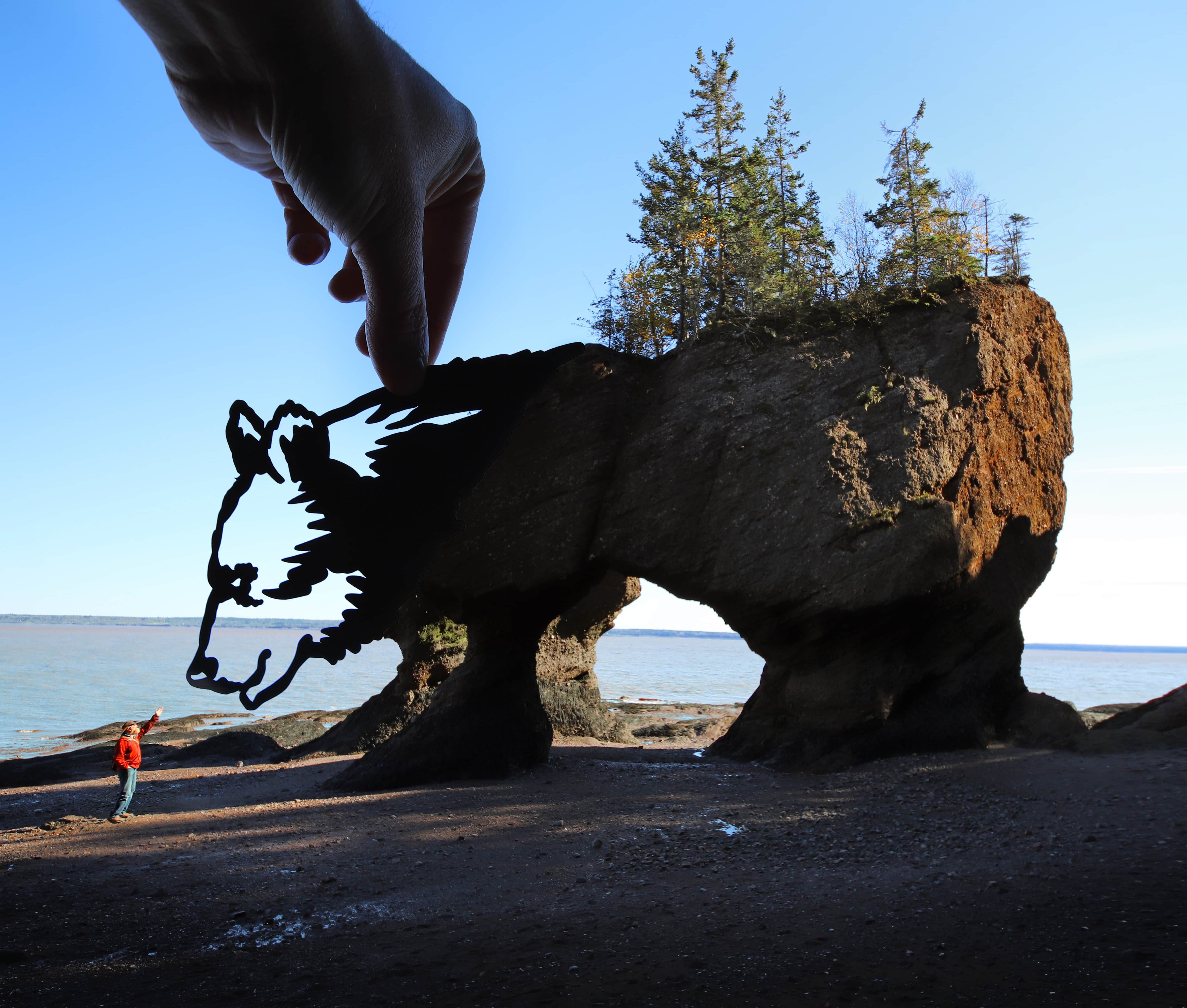 Bear cut out Final